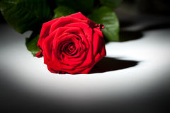 rose spot light